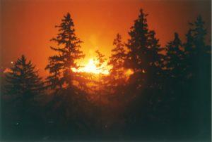 Waldbrandverordnung 2021