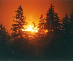 Waldbrandverordnung 2020
